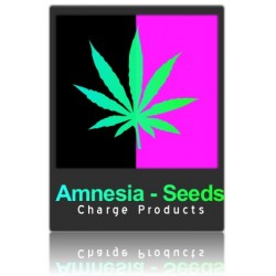 Amnesia cannabis seeds x 3